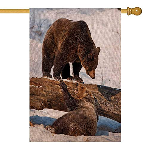 Buy Shorping Garden Flags Doubled Sided Garden Flag Spring Garden Flag Outdoor Garden Flag 28x40inch Brown Bears In The National Park Arctos Bayerischer Wald Home Garden Flag For Kids Online In Zambia